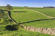 Потрясающий пейзаж, показывая сухой каменной стены — стоковое фото