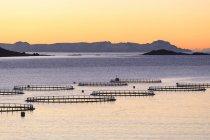 Рыбы цистерны трески и лосося — стоковое фото