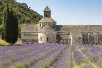 Récolte de lavande en face de Senanque Abbey — Photo de stock