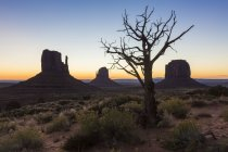 Дерева і чагарники перед сходом сонця — стокове фото
