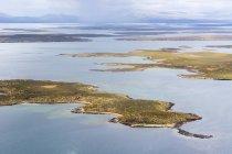 Морський лев острів, Фолклендські острови — стокове фото