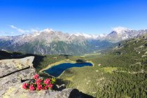 Rhododendrons and Lake Palu — Stock Photo