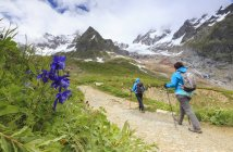 Wanderer mit Aquilegia Blumen — Stockfoto