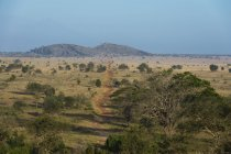 Lualenyi Game Reserve, Tsavo, Kenya - foto de stock