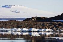 Paisaje ártico con Oso Polar - foto de stock