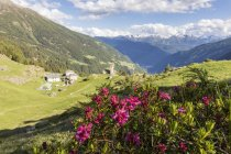 Rhododendrons et village alpin — Photo de stock