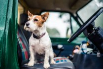Hundesitting in Auto — Stockfoto