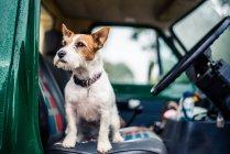 Dog sitting in car — Stock Photo