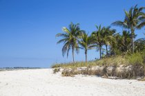Cabbage Beach mit Palmen — Stockfoto