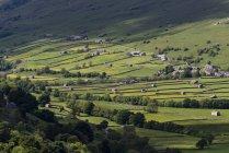 Vue de granges et de prairies traditionnels, Gunnerside, Yorkshire Dales National Park, Angleterre — Photo de stock
