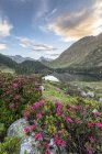 Rhododendrons and Lake Cavloc — Stock Photo