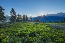 Brenta mountain range at sunrise — Stock Photo