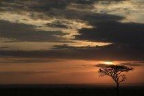 Silhouette de l'arbre aux oiseaux — Photo de stock