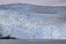 Geleira de Aialik e splash parto glacial — Fotografia de Stock