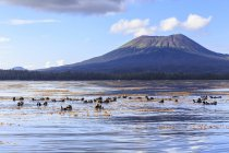 Seeotter, die auf dem Wasser treiben — Stockfoto