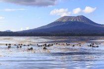 Lontras do mar flutuando na água — Fotografia de Stock