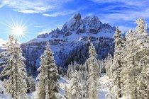 Зухвалість de Putia і ліс після снігопаду — стокове фото
