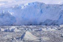 Лавина льоду в гавані Neko — стокове фото