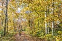 Mujer que camina en el bosque - foto de stock