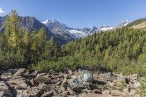 Monte Disgrazia and  Malenco Valley — Stock Photo