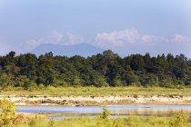 Llanuras de Terai y gama de la montaña Manaslu en el fondo, Parque Nacional Chitwan, Nepal, Asia - foto de stock