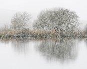 Голі дерева, поруч із озером під час снігопади в зимовий період — стокове фото