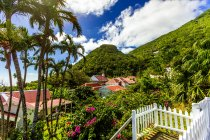 Picturesque Saba island with palm trees and green hills, Caribbean, Central America — Stock Photo