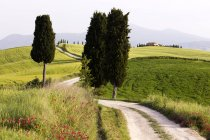 Cypress trees and green fields with path at Agriturismo Terrapille in Tuscany, Italy — Stock Photo