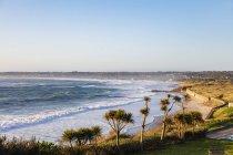 Sea coast and palm trees — Stock Photo