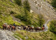 Horse transport on the trail to Refugio Chileno, Torres del Paine National Park, Patagonia, Chile, South America — Stock Photo