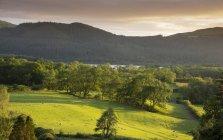 Montagnes verdoyantes et la lac Bassenthwaite sur toile de fond, Parc National de Lake District, Cumbria, Angleterre, Royaume-Uni — Photo de stock