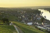 Vignes verdoyantes et Rhin au lever du soleil, Rudesheim, Rhénanie-Palatinat, Allemagne, Europe — Photo de stock