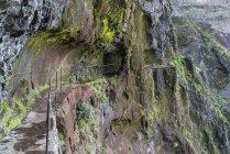 Rock tunnel on hiking trail, Santana municipality, Madeira, Portugal, Europe — Stockfoto
