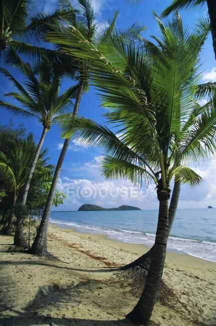 Criques de Palm sur le littoral — Photo de stock