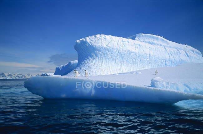 Manchots Adélie sur iceberg — Photo de stock