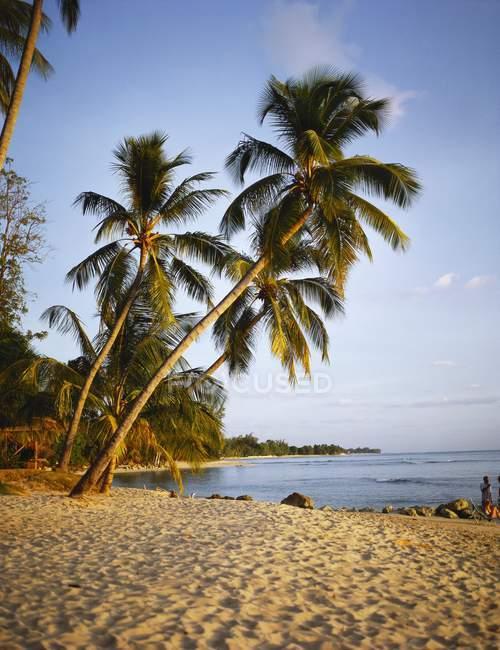 Пальмові дерева на піщаному пляжі — стокове фото