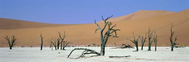 Dune di sabbia e alberi morti — Foto stock