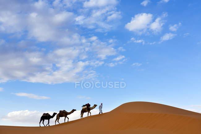 Berber Mann an der Spitze eines Zuges der Kamele — Stockfoto