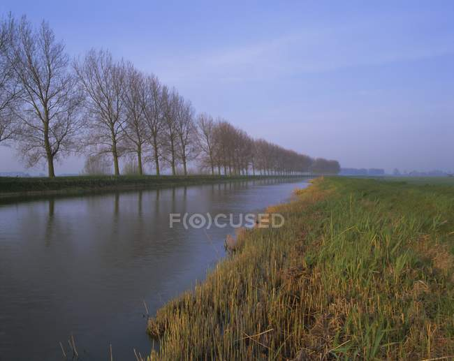 Tree lined canal in Holland — Stock Photo