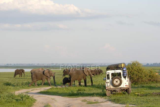 Grupo de elefantes e Land Rover — Fotografia de Stock