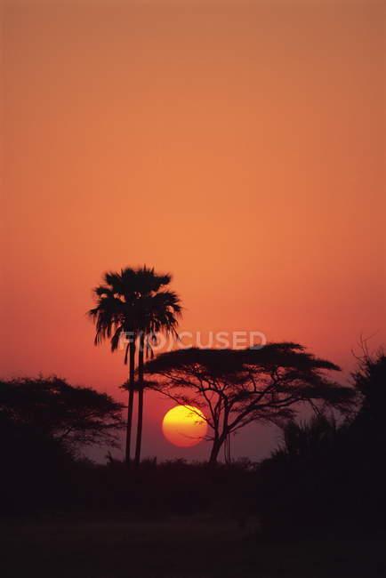 Arbres silhouettés contre le soleil — Photo de stock