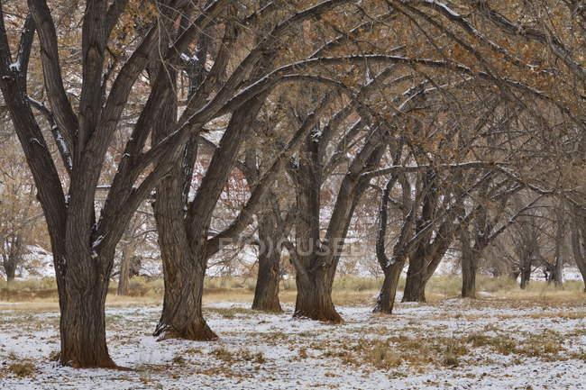 Árvores perto do centro do visitante — Fotografia de Stock