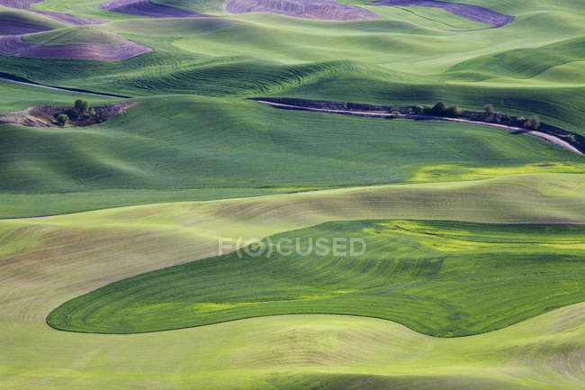 Spring in Palouse from Steptoe Butte — Stock Photo