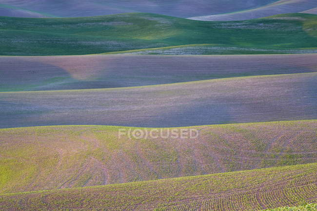 Field patterns at dawn in Palouse — Stock Photo