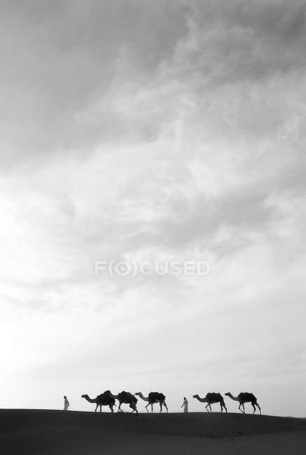 Kamel Zug mit Mann — Stockfoto