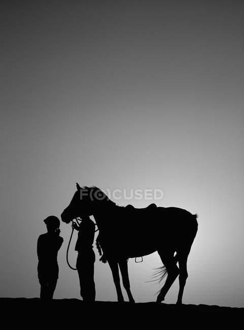 Pferd stehend gegen Himmel — Stockfoto