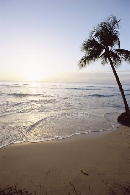 View of Palm on beach — Stock Photo