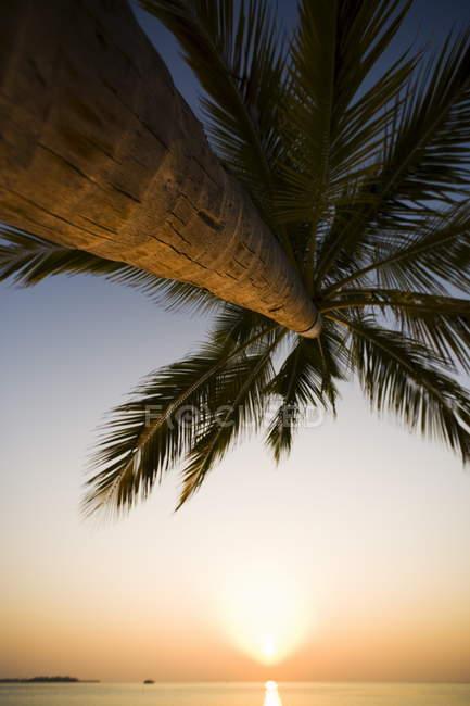 Дерево пальми і сонця над водою — стокове фото