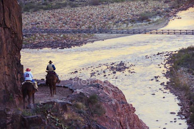 Mules prenant des touristes le long de la rivière — Photo de stock