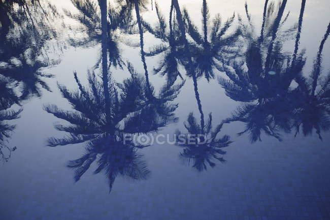 Пальми, відображені в басейні — стокове фото